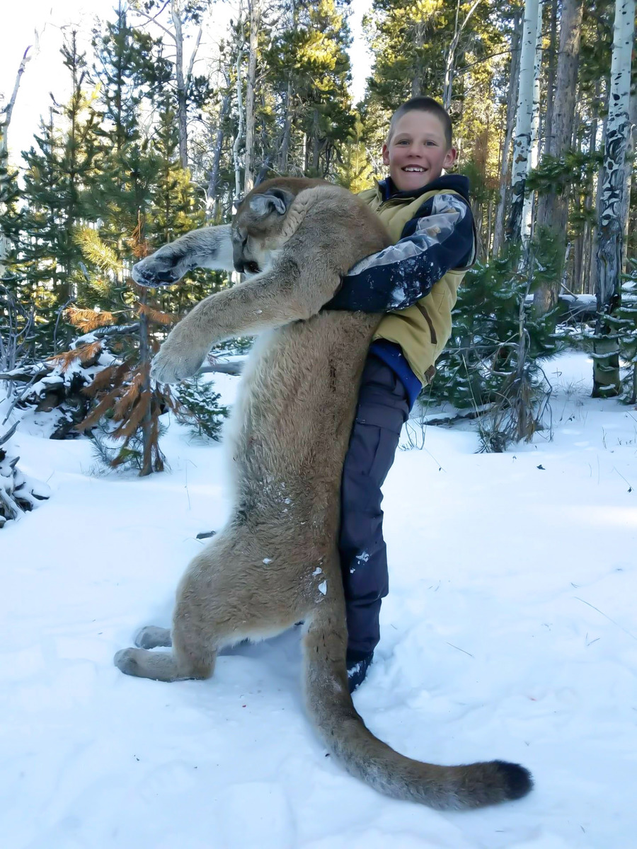 Colorado Mountain Lion Hunting 4